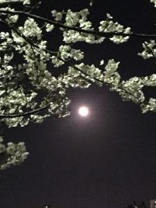 新潟整体工房 明るさ 月と桜